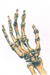 Hand Bones copyright 1999 by Michael D. Smith